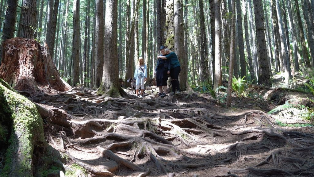 image of family walking in woods